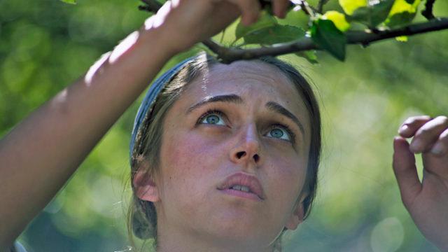 Cortando Frutas de las Ramas de los Árboles