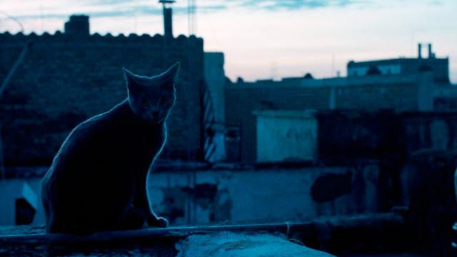 Un Gato en el Techo de la Casa
