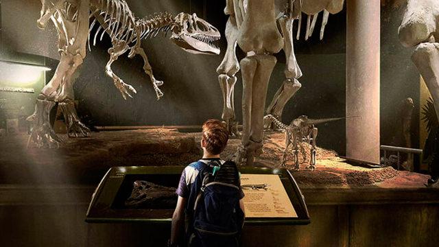 Observando los Huesos de Dinosaurios