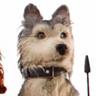 Jeff Goldblum en el papel de Duke, el perro gris y blanco