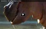 60 Encuentros letales  - El Hipopótamo
