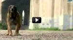 El peor de los casos - Ataque de perro