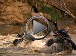 Grandes Migraciones - Cruzando el río